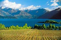 week 23 NZ vineyards