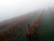 week 33 fog