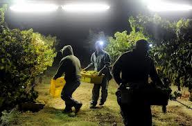 week 41 night harvesting