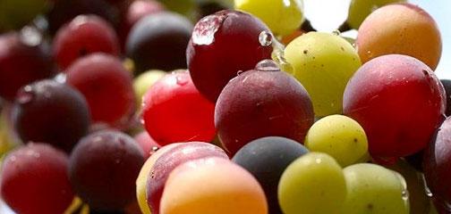 #52 - mix of grape colours