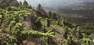 #54 - Catalan vineyards